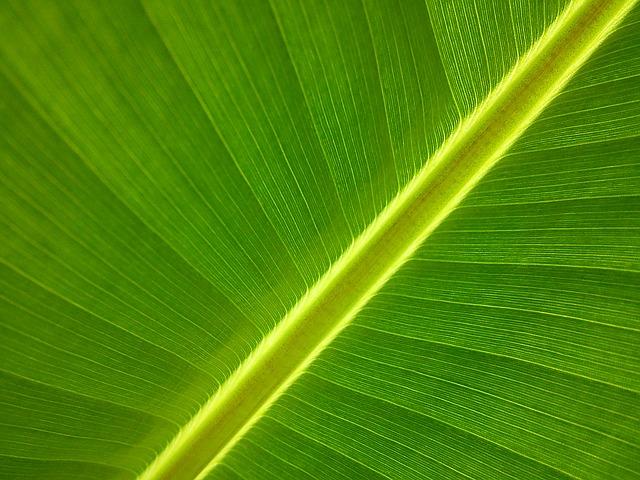 banánový list¨
