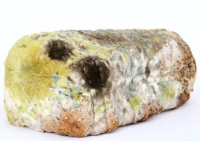plesnivý chlieb.jpg