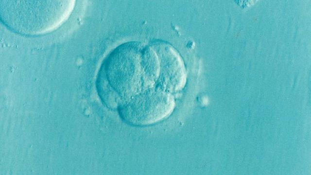 bunky embryo