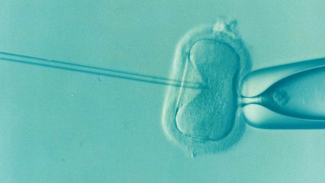 ivf neplodnosť plodnosť