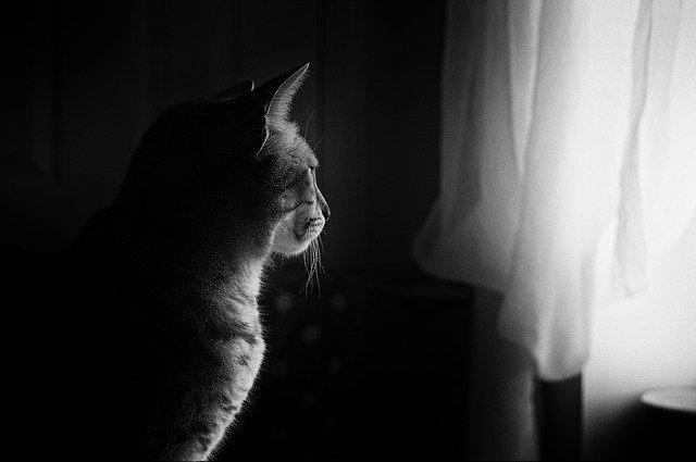 Mačka sedí pred oknom so záclonami